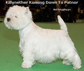 KillynetherKomingDownToPatnorWEb