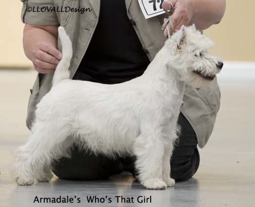 Armadale's Who's That Girl